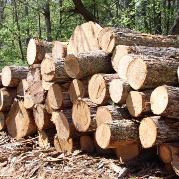 Accsys, slapende reus in de houtindustrie